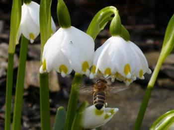 Zapojte se do mapování ohrožených druhů rostlin na Jesenicku!