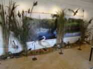 Výstava Bohatství ledu a vody zahájena bez vernisáže