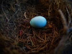 Díl jednadvacátý: Velikonoční rozprava o vejcích a lidech